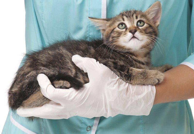 Малюсенький котенок ростом с мизинец фото — 7