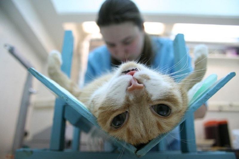 Какой наркоз при кастрации кошки