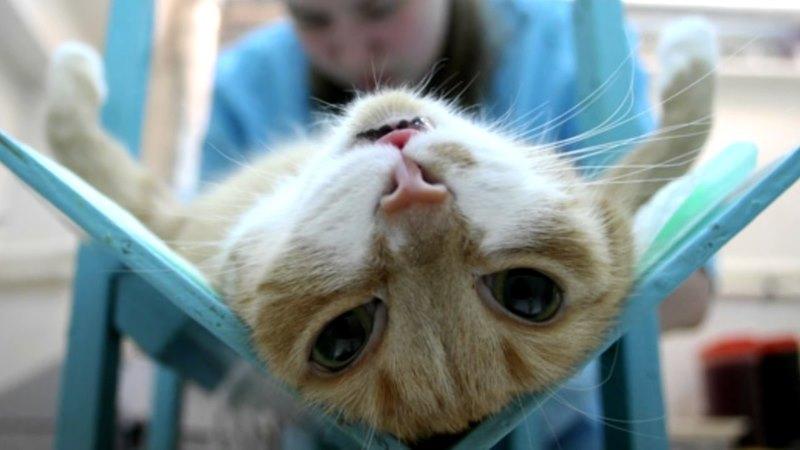 Кастрация взрослого кота все что нужно знать владельцу