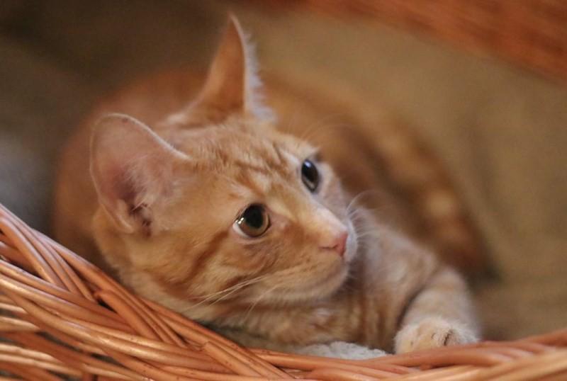 Уход за котом после кастрации: питание, туалет, обработка раны, как ведут себя, ос
