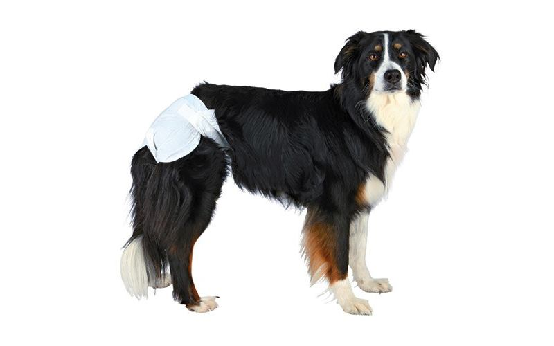 течка у собак как определить
