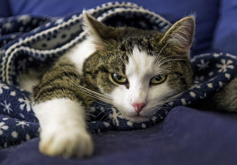 Стерилизация кошки последствия наркоза и уход после операции