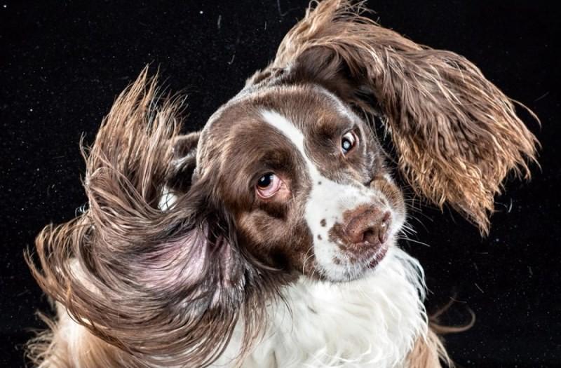 Почему собака трясет головой