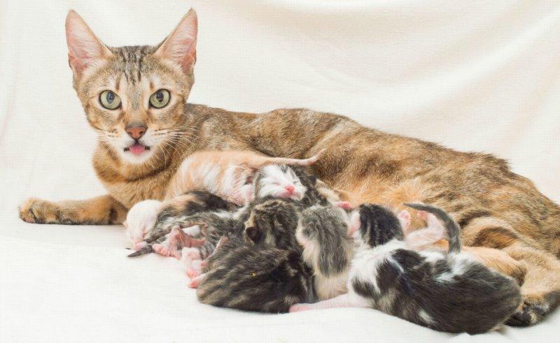 У кошки после родов кровяные выделения, что делать