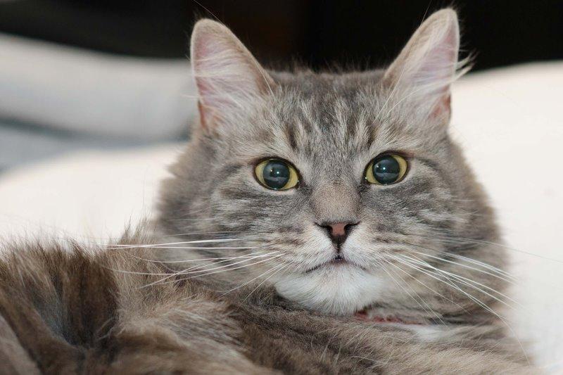 Что значат выделения у беременной кошки