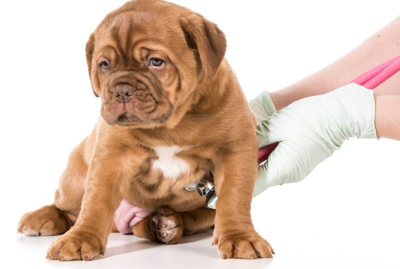 От чего может быть понос у щенка 2 месяца