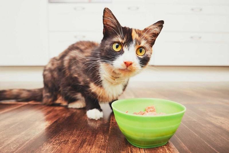 Как лечить кошку вазелиновым маслом от запора