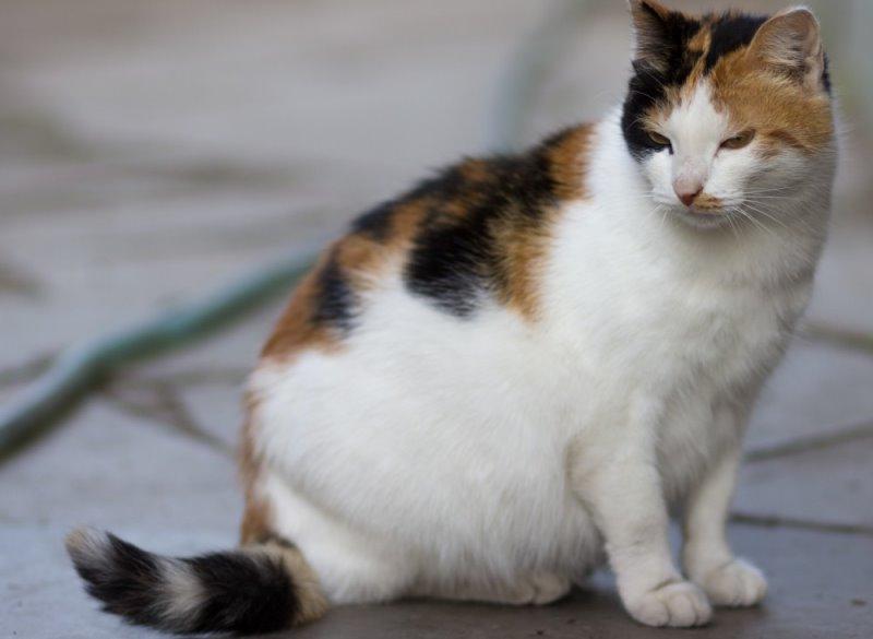 Как вызвать преждевременные роды у кошки Проблемы при преждевременных родах у кошки