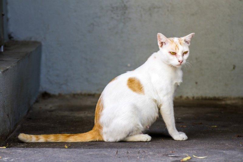 Как выглядит кошка