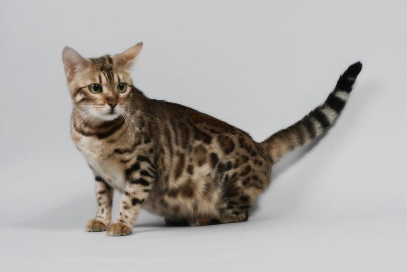 Роды у кошки - как принимать роды у кошки в домашних условиях?