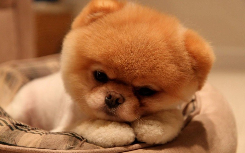 Понос у щенка в 2 месяца: причины и первая помощь ' Ветеринария '