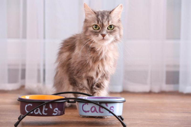 Кошка не ест после родов: 10 основных причин голодной диеты