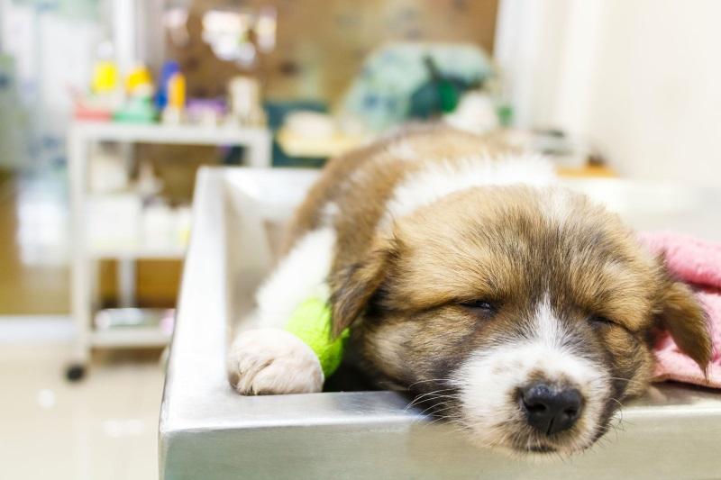 От глистогонного может быть понос у щенка