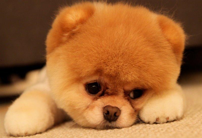 У собаки запор – что делать и как лечить?
