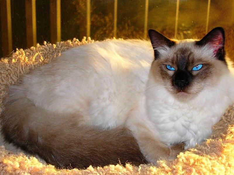Кошка после родов часто дышит когда норма а кода патология