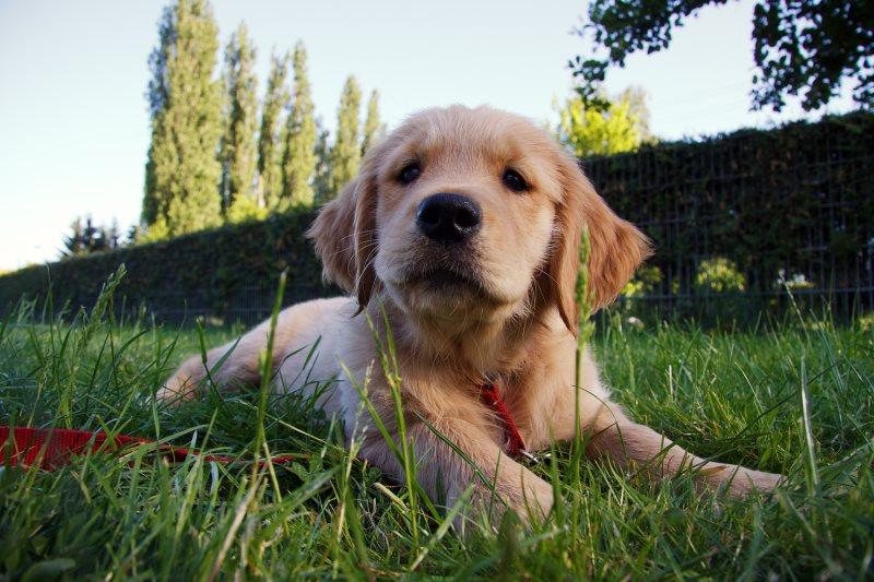Энтеросгель собаке: как давать, дозировка при поносе