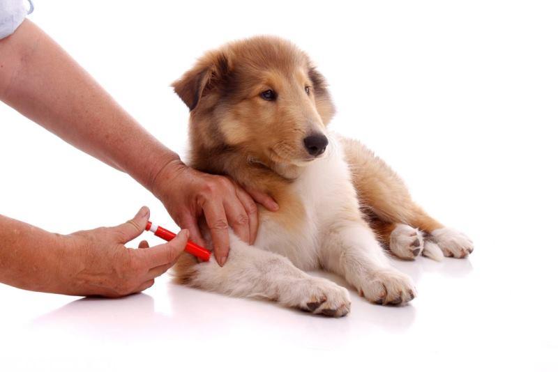 После вакцинации у собаки диарея