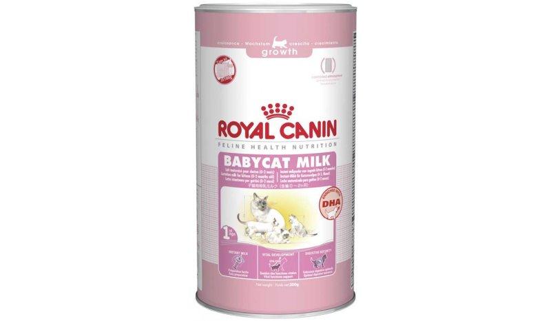 У кошки нет молока после родов: причины, что делать для восстановления лактации и чем кормить котят