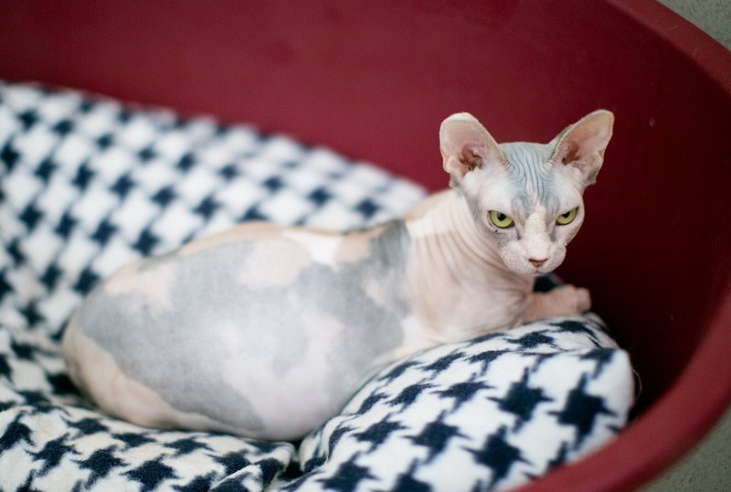 Какая температура у беременных кошек