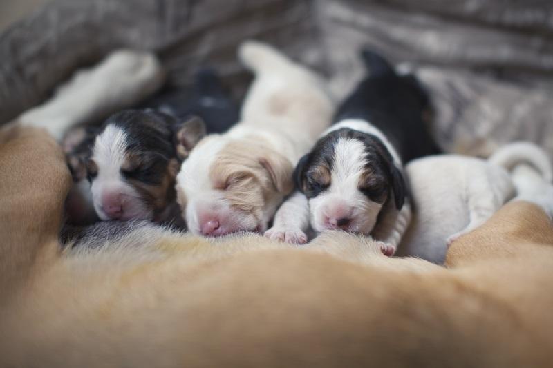 Что делать если у двухнедельных щенков понос