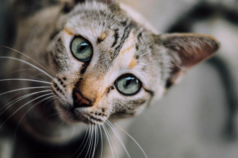 Слабительные средства для кошек и собак какое слабительное от запора можно дать в домашних условиях