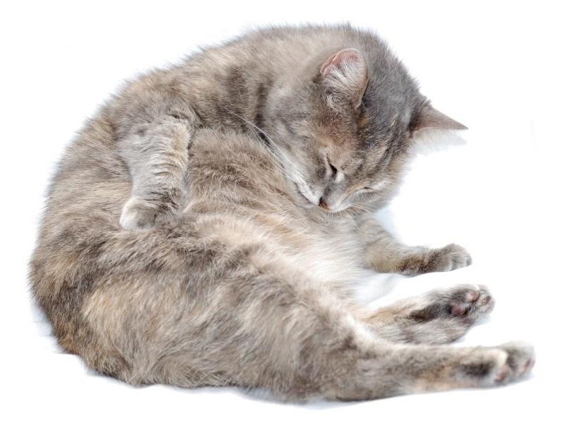Предвестники скорых родов у кошек признаки которые нельзя пропустить