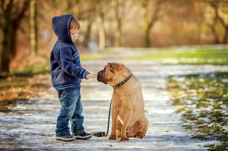 Картинки мальчик кормит щенка