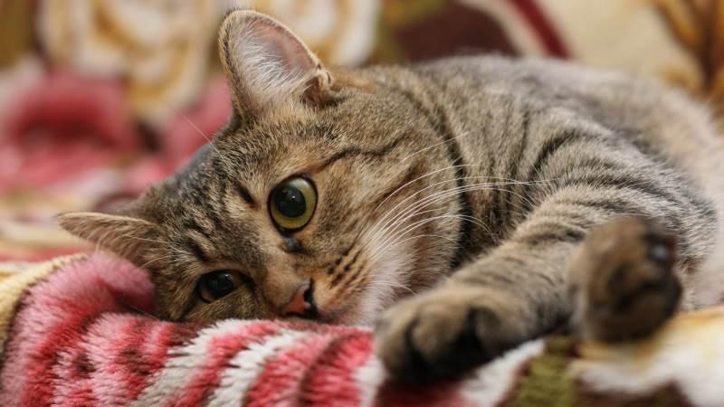 В каком возрасте уже можно стерилизовать кошку thumbnail