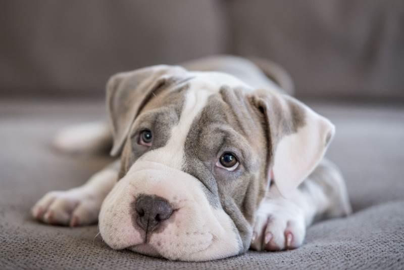 Фото кожных заболеваний у собак