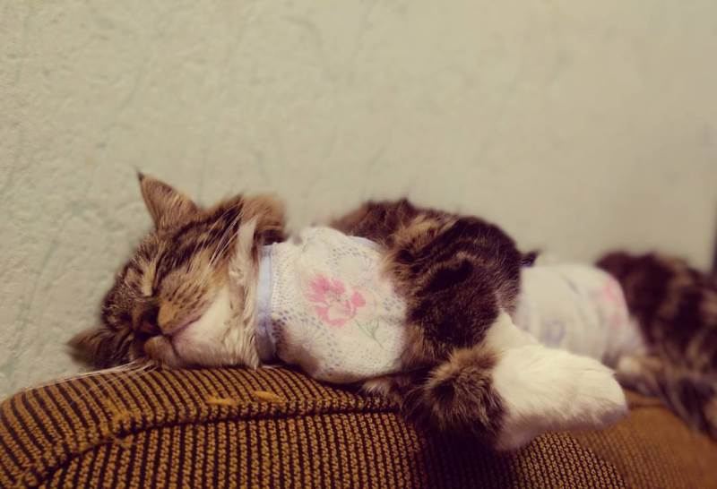 Нормальное состояние кошки после стерилизации и отклонения от него