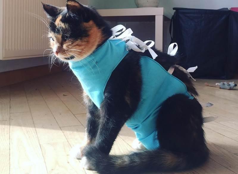 В каком возрасте уже можно стерилизовать кошку