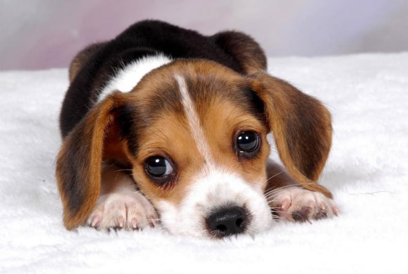 Черный грибок на коже у собаки