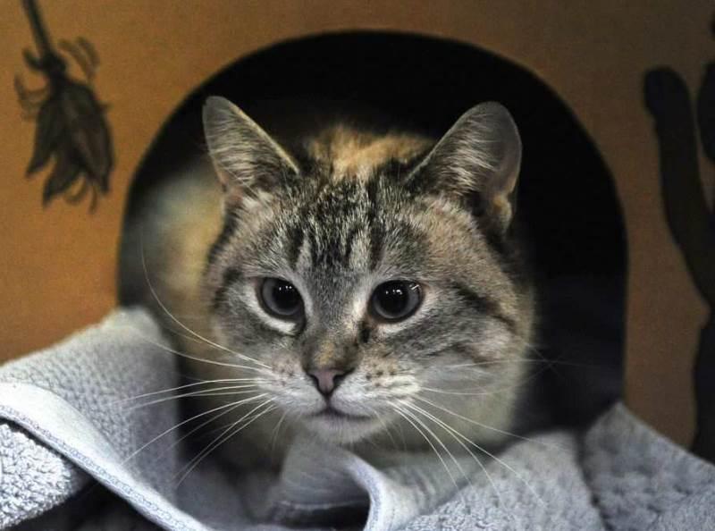 Возможна ли стерилизация беременной кошки