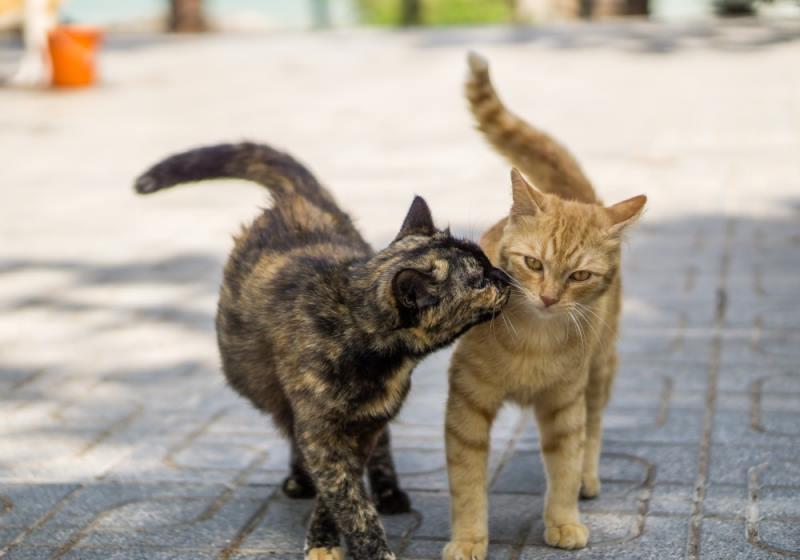Почему кошка начала есть своих котят после родов