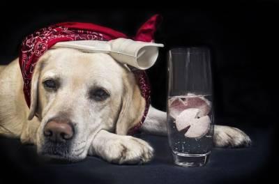 Сотрясение головного мозга у собаки симптомы