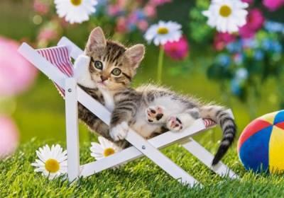 Подстилка для кошки своими руками  просто быстро красиво