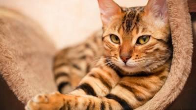 Заболевания поджелудочной железы у кошек