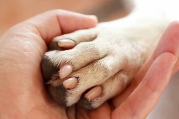Грибок у собаки: симптомы и лечение