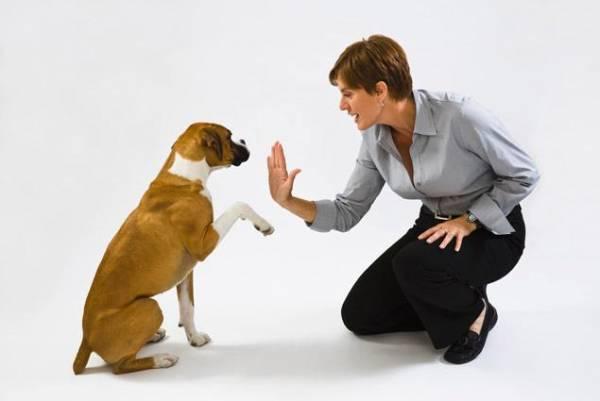 Как переводить собаку на другой корм