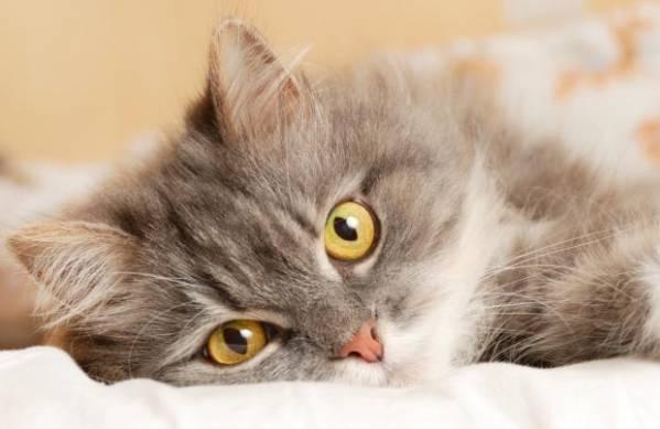 Сопли у кошки причины что делать чем лечить