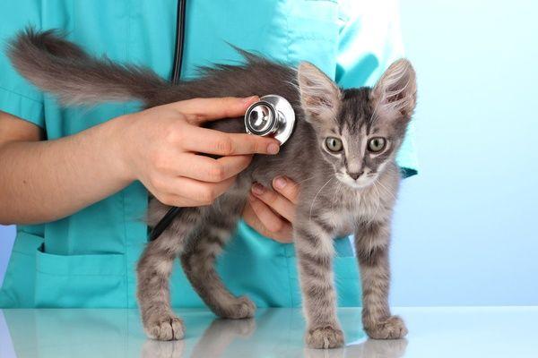 Кот простудился чем лечить