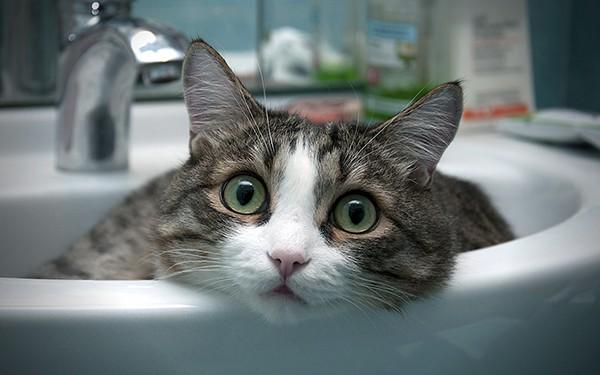 Как мыть кошку если она боится воды