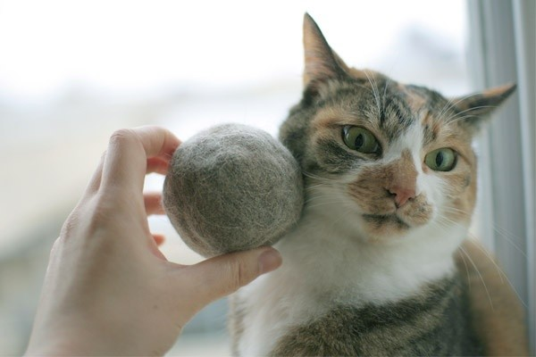 Почему выпадает шерсть у кошки
