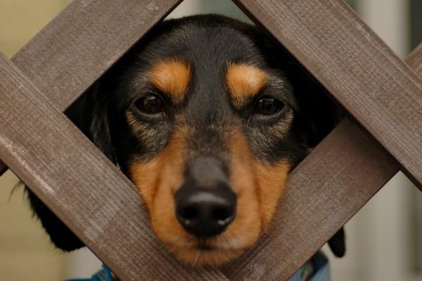 Как часто можно глистогонить щенка?