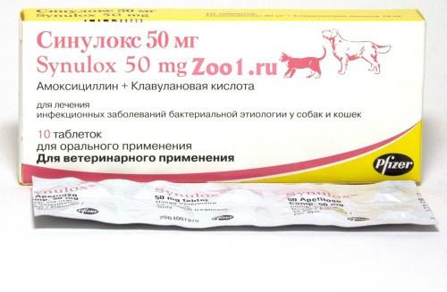 Синулокс для кошек обзор препарата