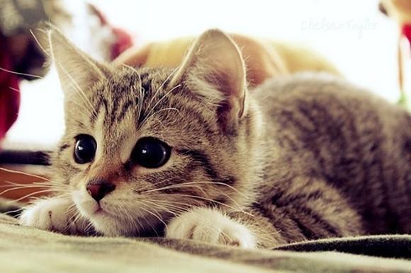 Эпулис у кошек опасная патология ротовой полости