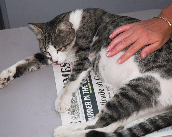 Как ведут себя кошки перед родами