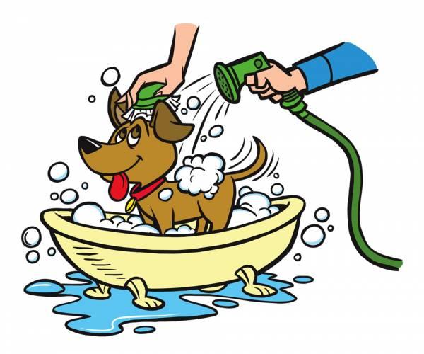 Как правильно купать щенка