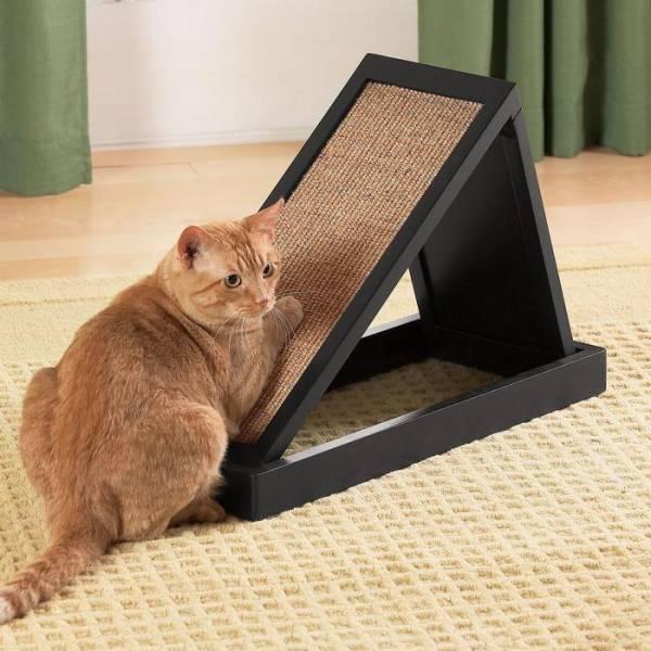 Лазалка для кошек своими руками какую выбрать и как сделать