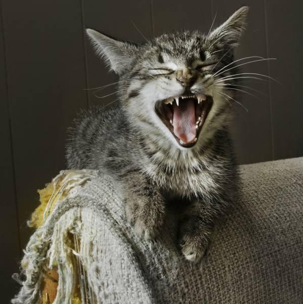 Виды когтеточек для кошек
